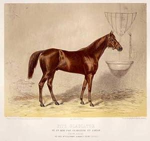 Fitz Gladiator. Né en 1850 par Gladiator et Zarah.: PFERD. Rennpferd.