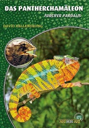 Das Pantherchamäleon : Furcifer pardalis: David Hellendrung
