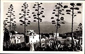 Ansichtskarte / Postkarte Tunis Tunesien, Sidi Bou