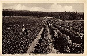 Ansichtskarte / Postkarte Au Pays du Cognac,