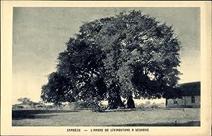 Ansichtskarte / Postkarte Sesheke Sambia, L'Arbre de