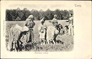 Ansichtskarte / Postkarte Tunesien, Glaneuses arabes, Tunesische
