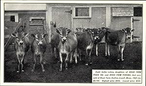 Ansichtskarte / Postkarte Eight helfer calves, daughters