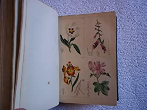 The Young Lady's Book of Botany; Being a Popular Introduction to That Delightful Science. With Tw...
