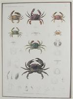 H.N. Zoologie. Crustaces.: J-Ces Savigny