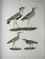 H.N. Zoologie Oiseaux Pl 6: Savigny