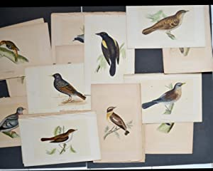 ( BIRDS ) 50 ORIGINAL COLOURED ENGRAVINGS .- ( OISEAUX )