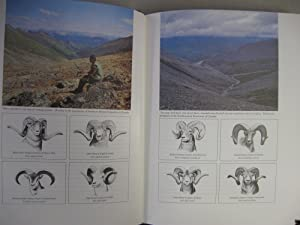 Argali High-Mountain Hunting; (Ltd # Signed): Medem, Ricardo