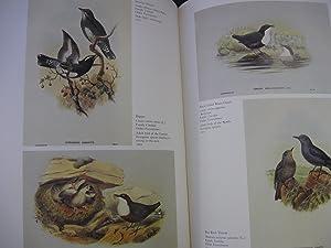 John Gould's Birds: Gould, John