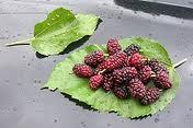 Botanica de los cultivos tropicales: Jorge Leon