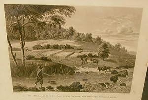 Nouvelle-Galles Du Sud: Nlle. Hollande. Vue De Cox-River, Dans L'ouest Des Montagnes-Bleues ...