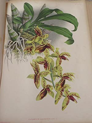 Indigenous Flowers of the Hawaiian Islands : Forty-Four Plates Painted in Water-Colours and Descr...