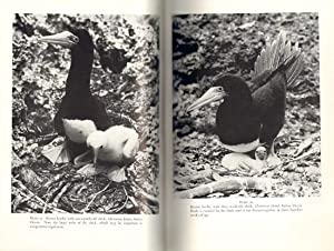 The Sulidae: gannets and boobies.: Nelson, J. Bryan.