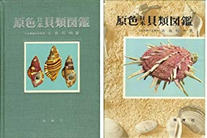 COLOURED ILLUSTRATIONS OF SHELLS OF JAPAN: Kira, Tetsuaki