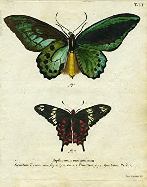 Papilionum Exoticorum: Butterfly/Moth Engraving] Leitner, Joh