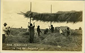 Rice Threshing in the Philippines. (numbered 184): Real photo postcard