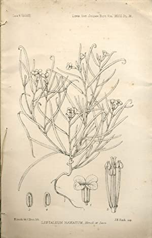 Report on Antarctic plants to Sir Joseph Hooker, in The Journal of the Linnean Society, Botany No...