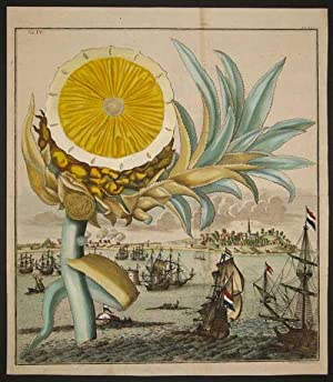 "Pineapple, Tab IV from ""Nurnberische Hesperides"": Volckamer, Johann"