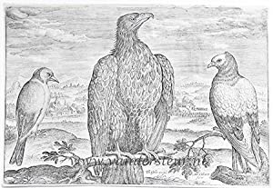 Wagtail, Eagle and Turtledove [Avium Vivae Icones; set]