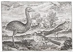 Double-wattled Cassowary and Finches [Avium Vivae Icones; set]