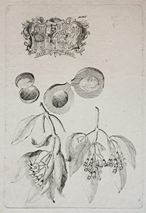 Etching/ets: Studies of a plant, a fruit and a vignette (Studie van plant, perzik (?) en een vign...