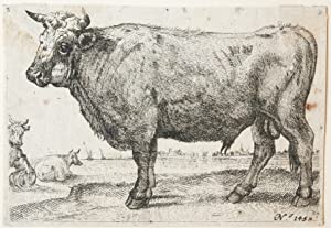 Ets/etching: The Bull [Set:  Series of various Oxen and Cows ] (De Stier).