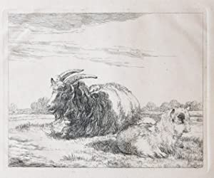 Etching/Ets: A goat and her pup resting on a meadow (Een geit en haar baby rusten in de wei).