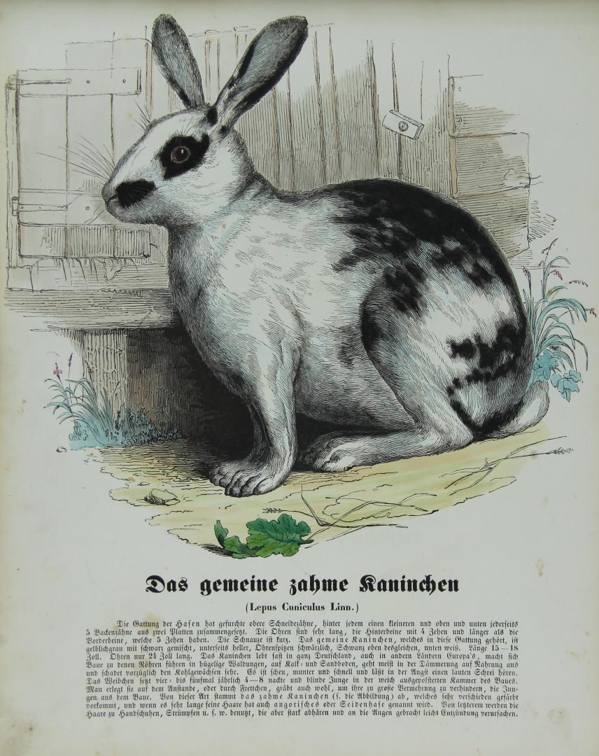 naturgeschichte des thierreichs, Erstausgabe - ZVAB