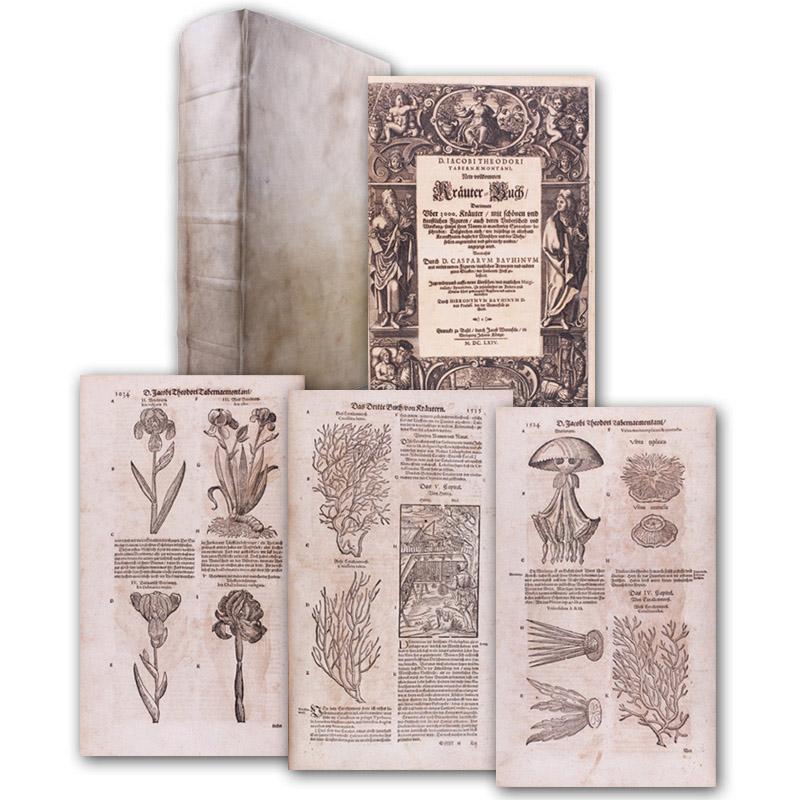 Neu vollkommen Kräuter-Buch, Darinnen uber 3000. Kräuter,: Tabernaemontanus, Jacobus Theodorus.