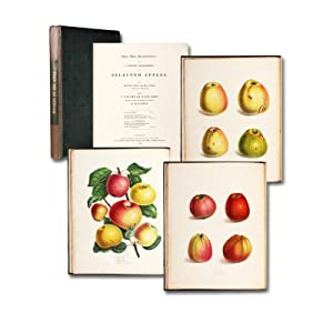 Pyrus Malus Brentfordiensis: or a concise description of selected apples.