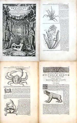Historia naturalis Brasiliae. in qua non tantum: Piso, Willem und