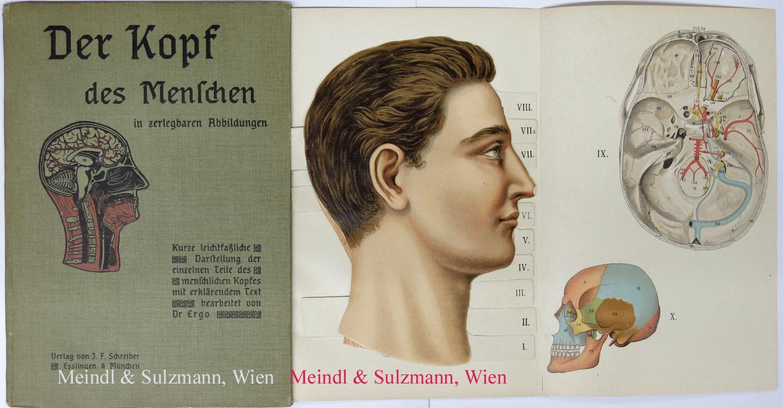 anatomie des menschen teil 1 - ZVAB