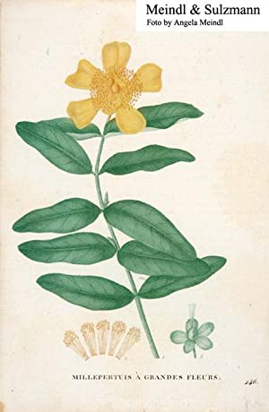 "Millepertuis à grandes fleurs"", wohl aus einem: Johanniskraut.- Alkol. Lithografie:"