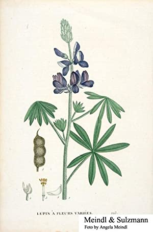 """Lupin a fleurs variées"""", wohl aus einem: Lupinen.- Alkol. Lithografie:"""
