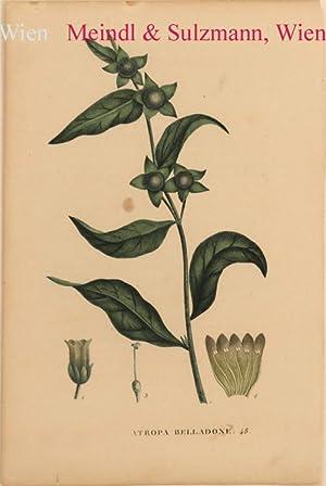 """Atropa belladone"""". (Blattnummer 48).: Schwarze Tollkirsche.- Alkol."""