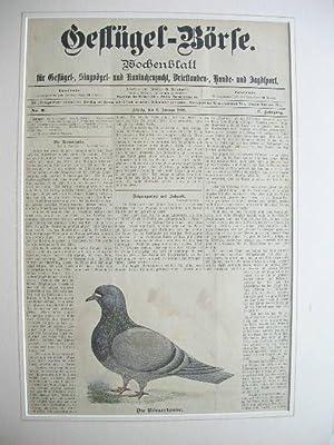 """Zeitschrift """"Geflügel-Börse"""": Titelblatt mit einer Taubenabbildung (Rö..."""