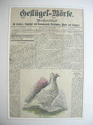 """Zeitschrift """"Geflügel-Börse"""": Titelblatt mit einer Taubenabbildung (Lockentaube..."""