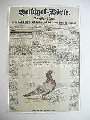 2. Aug. 1898): Kupferfarbiger Spiegel-Gimpel. //: Wochenblatt
