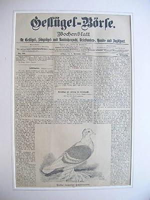 8. Nov. 1898): Rote kuppige Schildtaube.: Wochenblatt