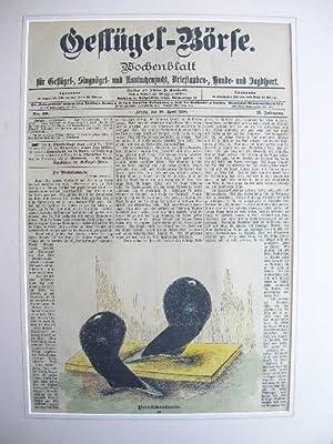 10. April 1900): Perrückentaube. //: Wochenblatt