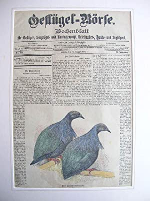14. Aug. 1900): Die Mähnentaube. //: Wochenblatt