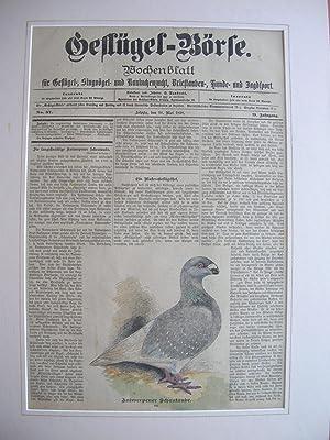 10. Mai 1898): Antwerpener Schautaube.: Wochenblatt