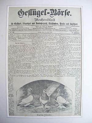 13. April 1898): Englische Tümmler.: Wochenblatt