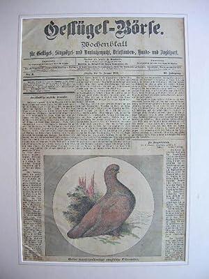 "Wochenblatt ""Geflügel-Börse"": Titelblatt vom 15. Januar 1901 (Gelbe kurzschn&..."