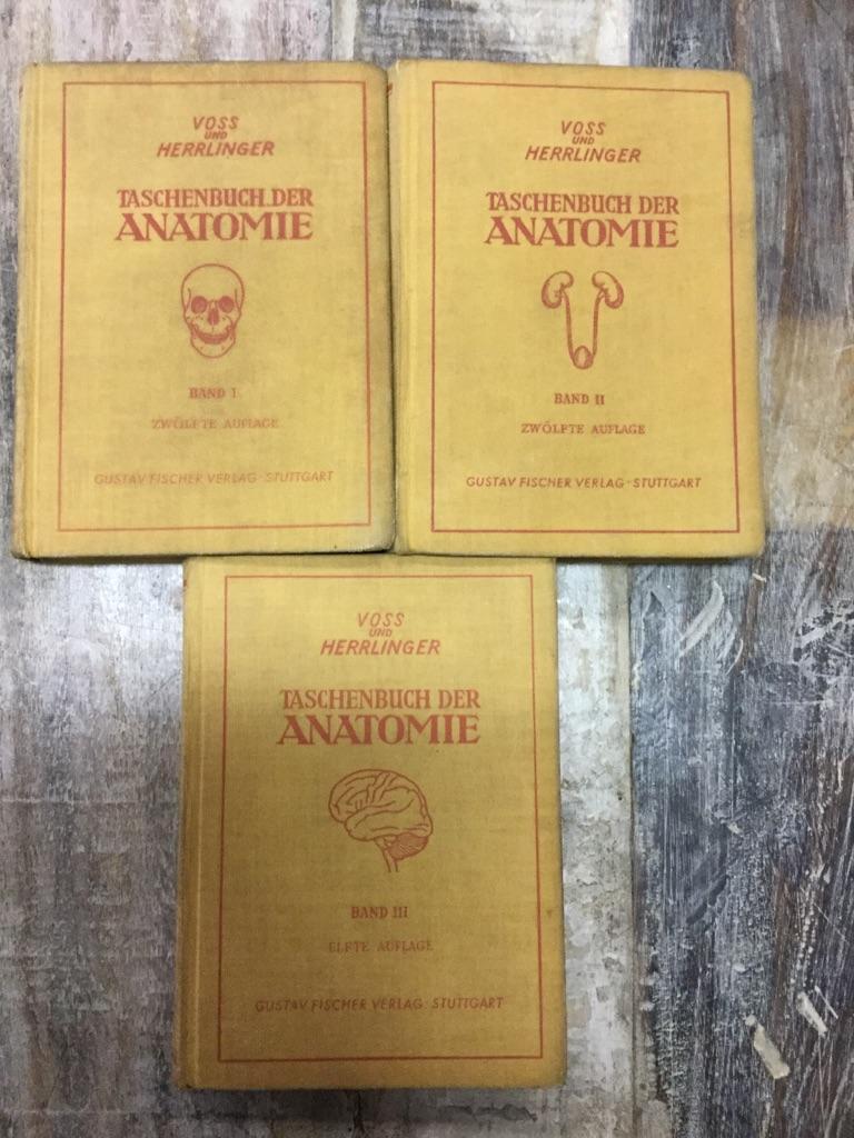 Fein Anatomie Und Physiologie Kapitel 10 Muskelgewebes Studienführer ...