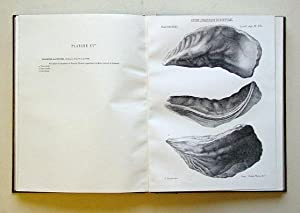 Description de la faune jurassique du Portugal. Mollusques Lamellibranches. (2 Teile in 1 Bd.).: ...