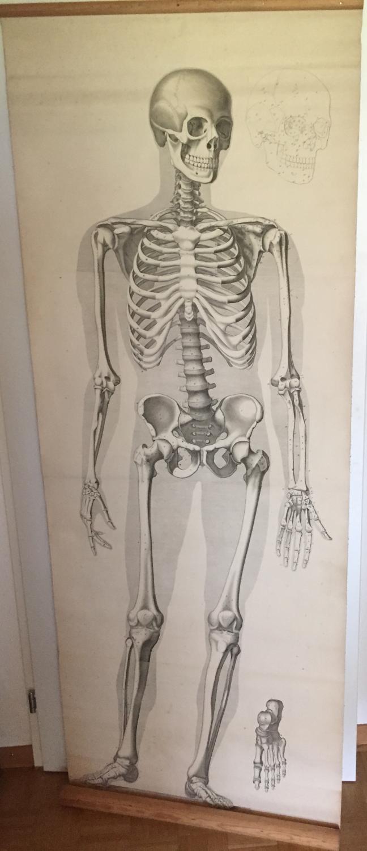 anatomische tafel - ZVAB