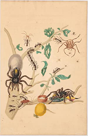Plate No: 18 (Spiders)