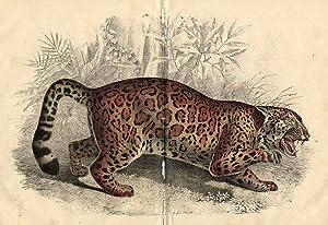 "Jaguar"".]"
