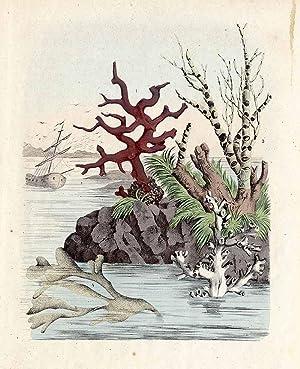 """Korale i wyspy koralowe.""""]"""
